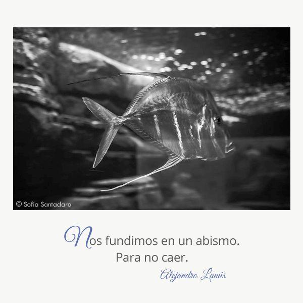 Nos fundimos en un abismo. Para no caer. #Umbrales #AlejandroLanus #Aforismos