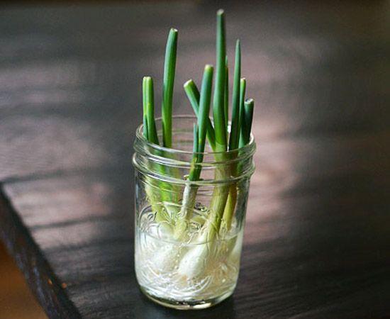 Faire pousser des oignons verts Bon truc : si vous placez vos oignons verts dans l'eau avec les racines vers le bas, ils repousseront à l'infini! L'idéal est de laisser le pot sur le comptoir.