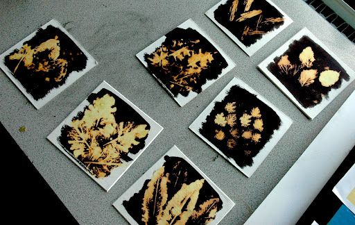 Cards are painted with india ink, and allowed to dry. Leaves or flowers are painted with bleach, then pressed onto the dried ink, making these amazing prints.
