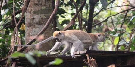 Taman Nasional Gunung Leuser Destinasi Wisata Alam yang Menarik