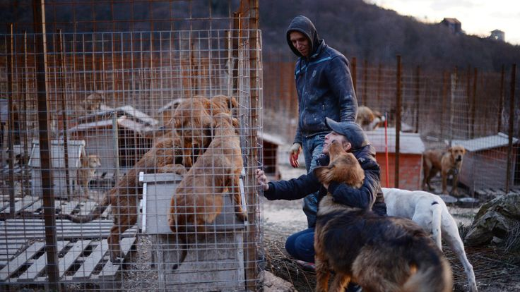 Racing to Save the Stray Dogs of Sochi