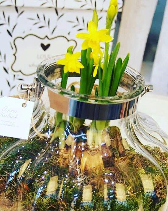 Przynieś wiosnę do domu !!! Czy już nie możesz się doczekać wiosny? Jeżeli tak zaproś ją do domu w postaci roślin cebulowych  #cebulki #wiosna #spring #narcyz #kwiaty #kwiaciarniaszczecin Zdjęcie użytkownika Zielona Moda.