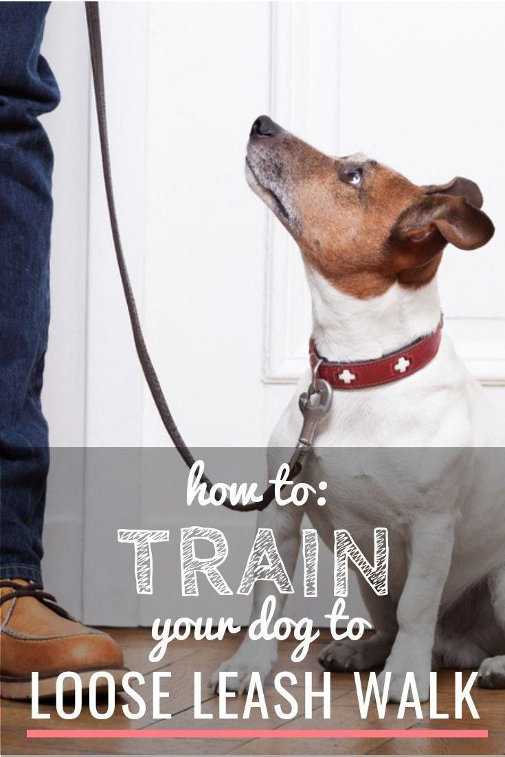 How To Deal With Aggressive Dog Behavior Problems Loose Leash