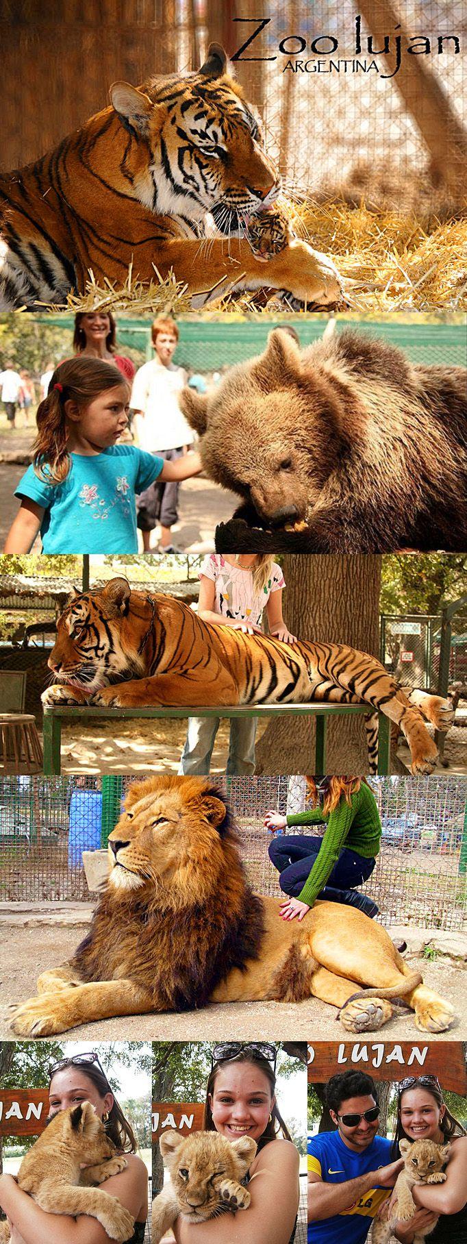 Zoo de Lujan, Argentina - Se você já foi à Argentina e não passou pelo Zoo de Lujan, considere voltar. É uma experiência fantástica. Nunca imaginei tocar em um tigre.