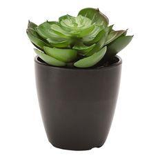 Living & Co Succulent Decor with Melamine Pot 11cm Assorted