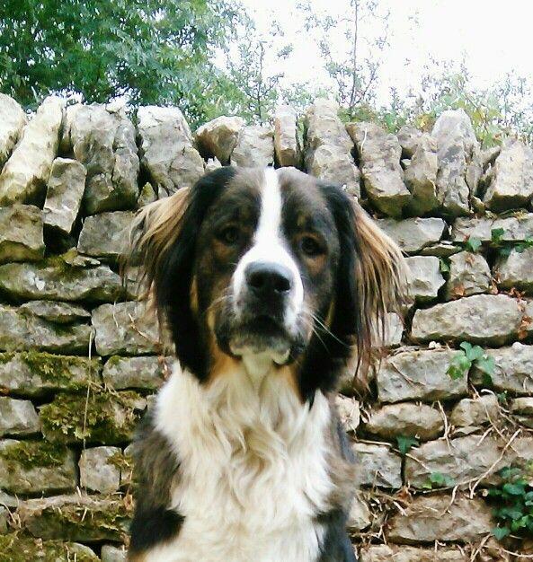 Beautiful, dog, animal, binc