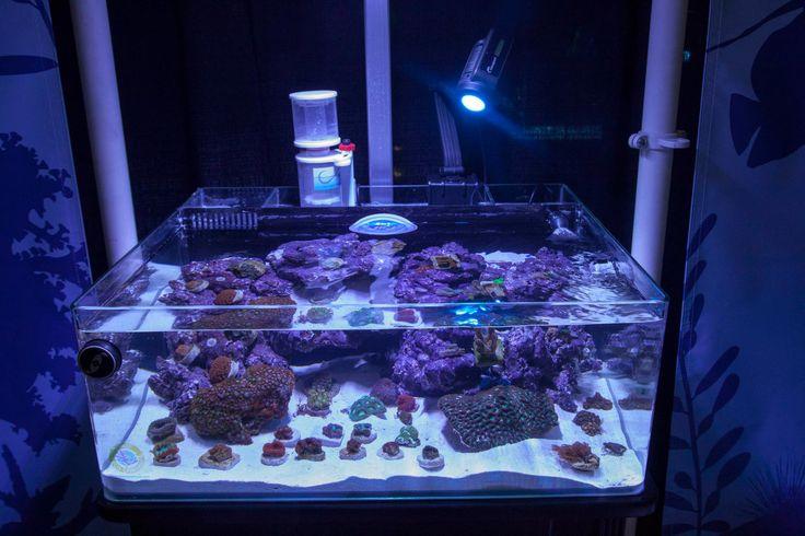 17 Best Coral Frag Tanks Sale Tanks Images On Pinterest