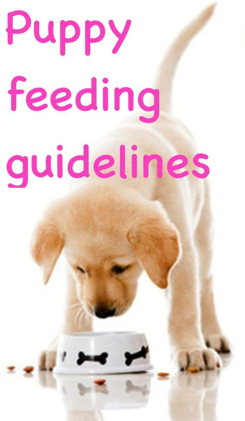 Puppy Feeding Guidelines All Things Dogs Pinterest Dogs