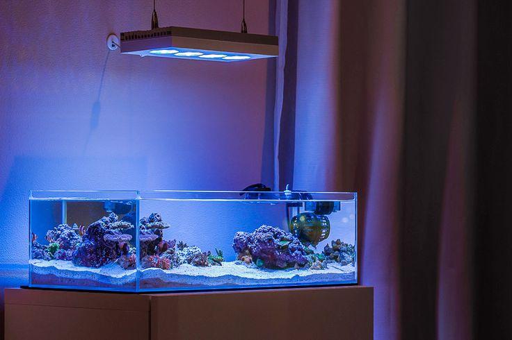 Ada 60 f ai hydra mp10 reef tank aquarium r cifal for Aquarium recifal nano