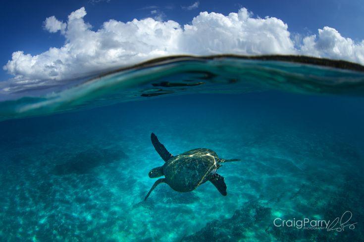 Byron Bay Turtle, Wategos