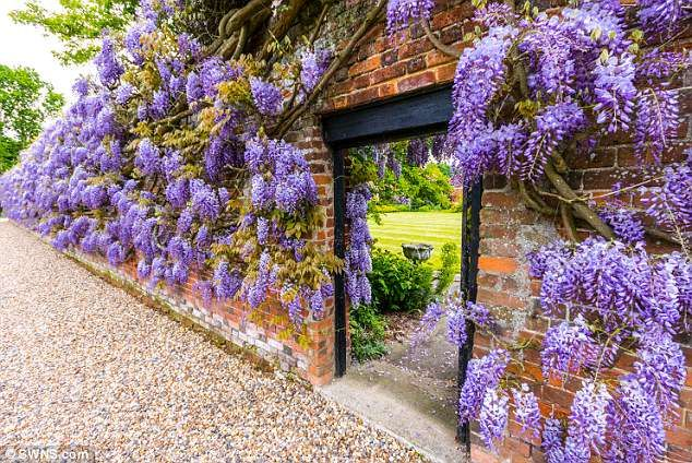 Nature Works Magic With Wisteria Blooms To Make You Purple With Envy Wisteria Garden Gates Bloom