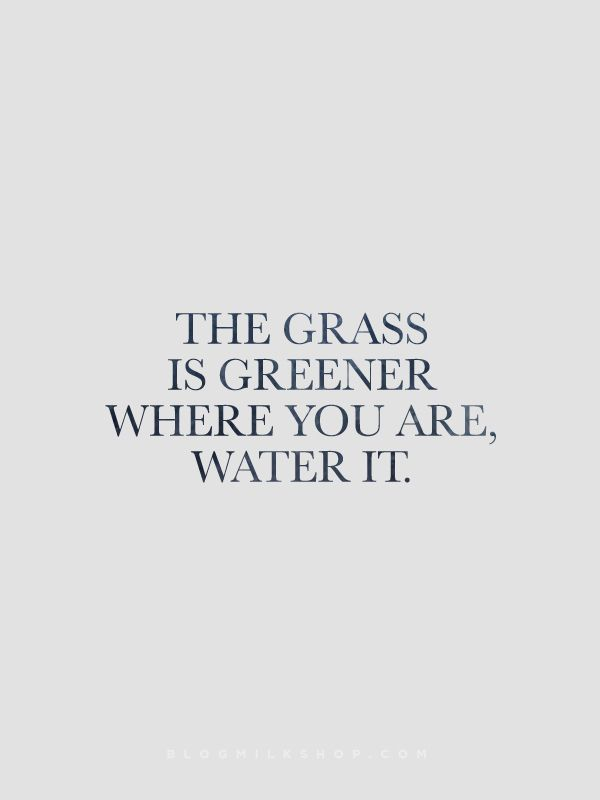 Relationships are like plant if your don't nourish it, it will die. No matter how bad the plant looks if it's left without water for some time. It can still live again with a little TLC #dontgiveuponlove #cherish #sheikisms