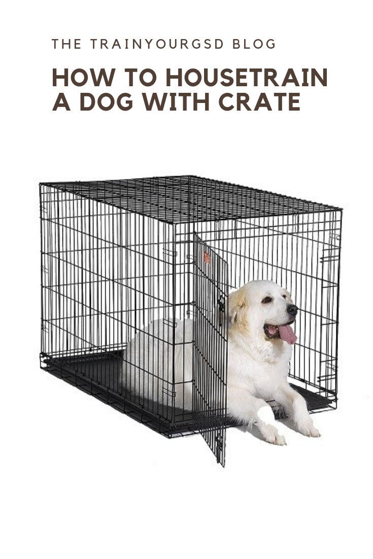How To Housetrain A Dog With Crate Housetrain Cratetraining Dog Crate Midwest Dog Crates Xxxl Dog Crate
