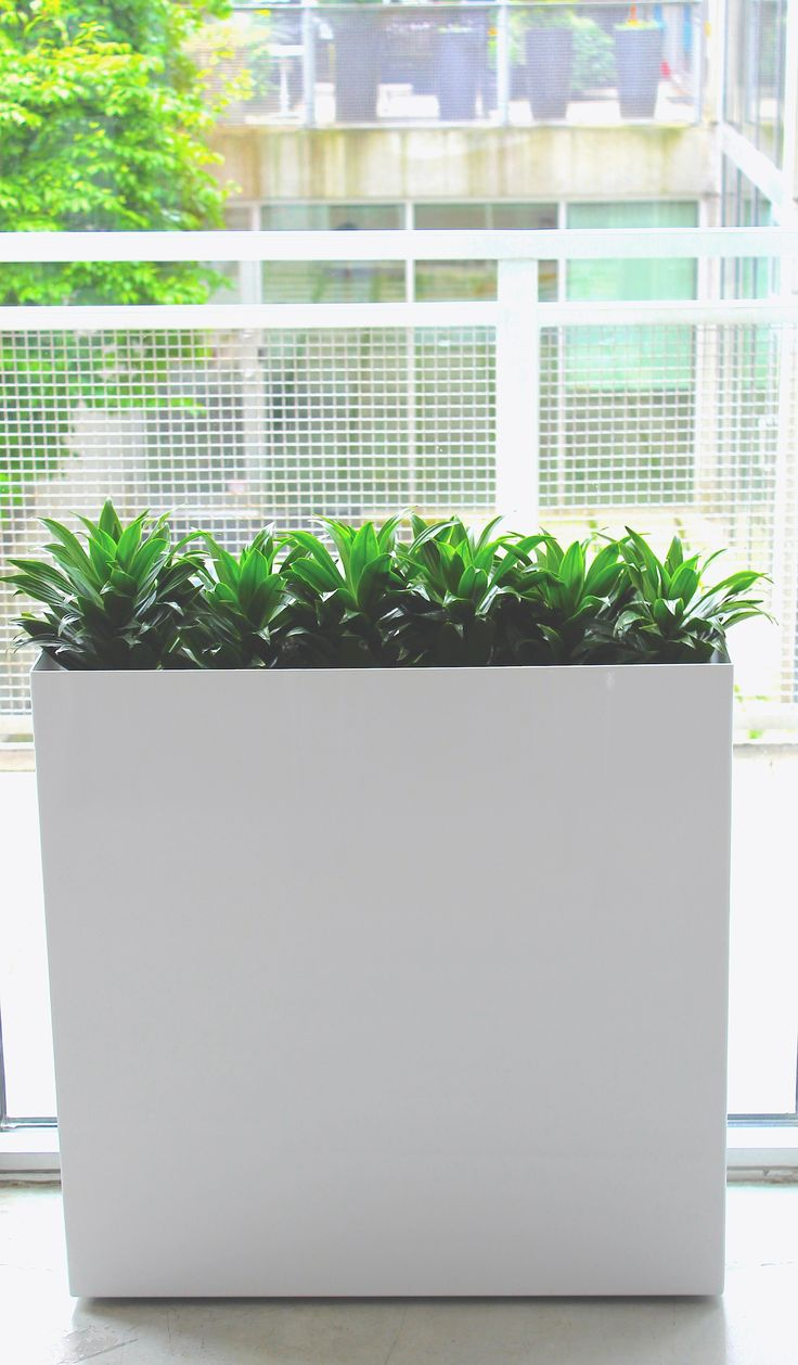Beautiful and modern planter. In our Gloss White finish. Equipped with Ollie EZ Fill-ter bag and Ollie Plant Sippers L21 (x2)