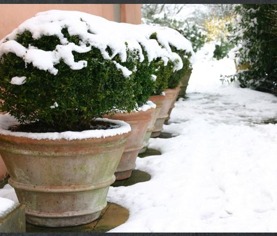 14 best images about terracotta pots on pinterest for 14 m4s garden terrace