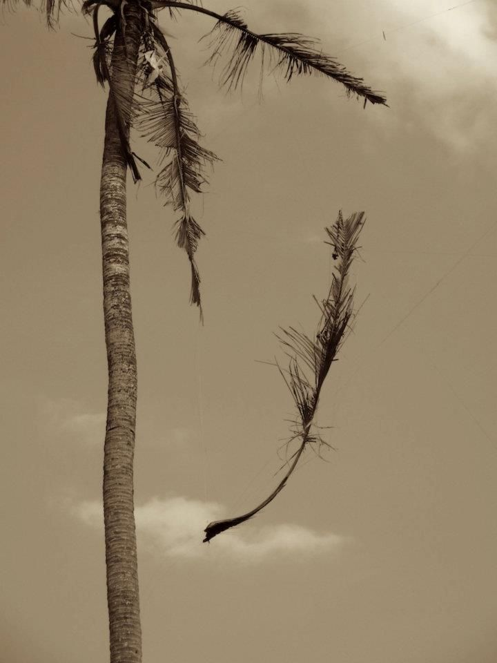 """""""The Tree that would not die"""", 2011, from SOMETHING before NOTHING series"""