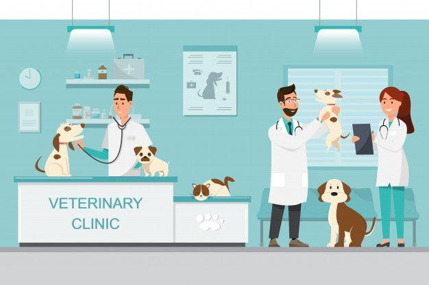 Vector veterinarian PNG and Vector in 2020 | Cartoon boy, Veterinarian,  Cartoon