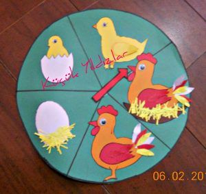 life of cycle chicken craft