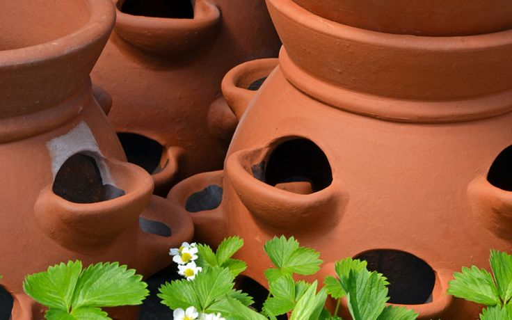 A Strawberry Planter is a great place to house plants and will look beautiful in your yard or patio. Here are several of plants you might consider growing.