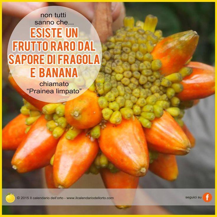 Esiste un frutto raro dal sapore di fragola e banana