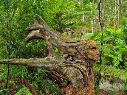 Tronc arbre tête tree head nature
