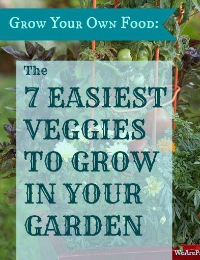 Grow Your Own Food: The 7 Easiest Veggies to Grow
