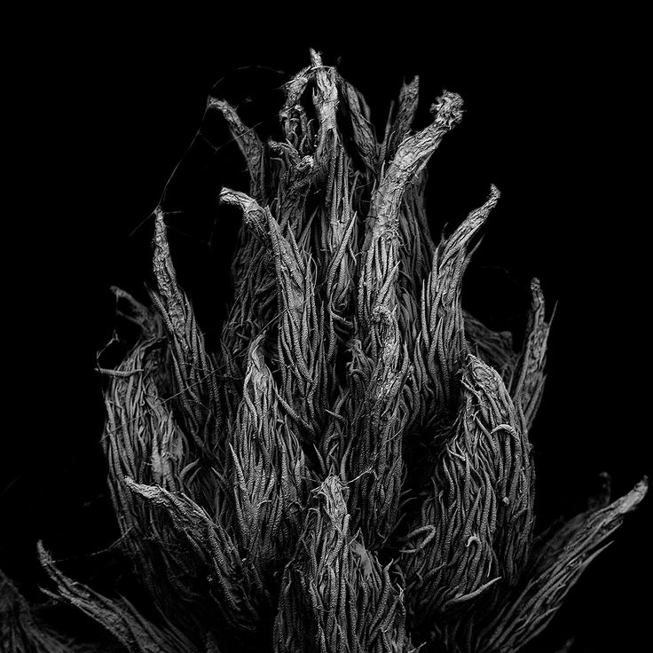 """Matsuura Tomoya, Withered plant """"Unknown"""" — larghezza dell'immagine 1,8 mm"""