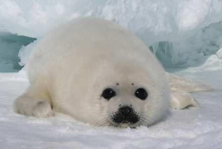 """RENOVAÇÃO = تجديد  = Renewal = Erneuerung =Pеконструкu =ОБНОВЛЕНИЕ =Vernieuwing = התחדשות 续期 """"*: Acabou a maior matança anual de mamíferos marinhos...Acabou a maior matança anual de mamíferos marinhos.... O respeito finalmente Click e acompanhe!"""