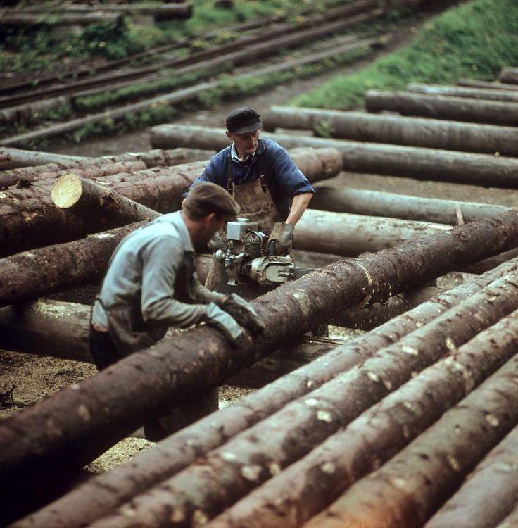 Ddr Fortwirtschaft Th 252 Ringer Wald 1969 V Like Vintage