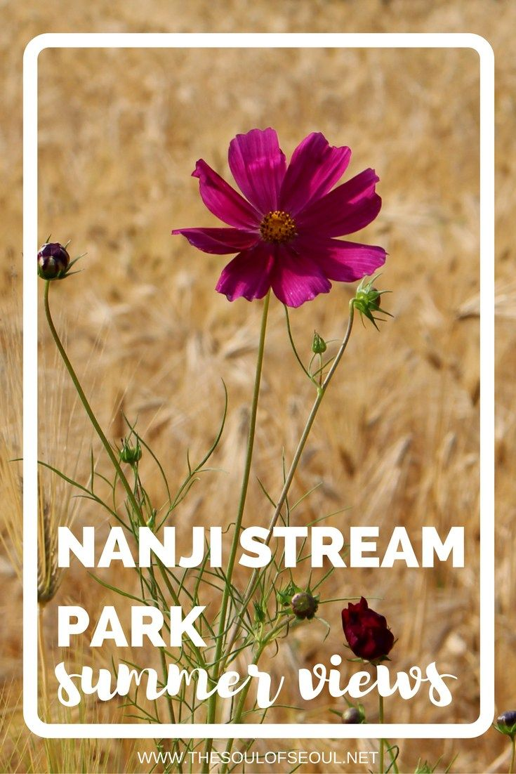 Nanji Stream Park, Summer Views, Seoul, Korea. Where to see scenic landscapes…