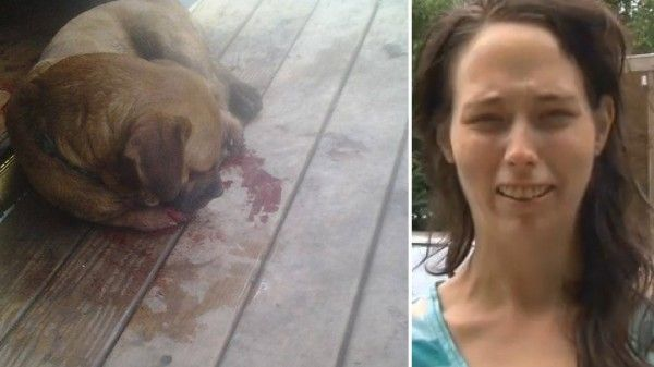 West Virginia dog found with paws cut off, owner is devastated! Act Now! | YouSignAnimals.org