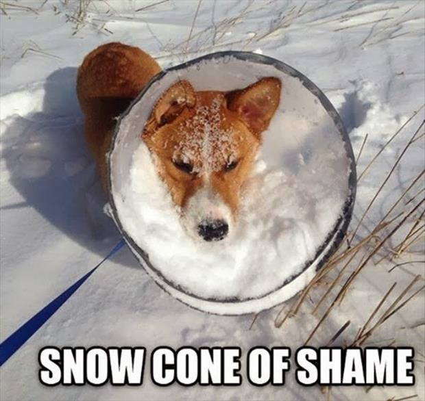aawwww, I hope the snow only stayed there long enough for the photo. Attack Of The Funny Animals – 41 Pics