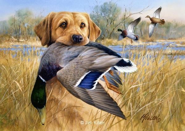 Great Retrievers Yellow Labrador-Mallard<br>Artist Proof Edition-13 1/2 x 18