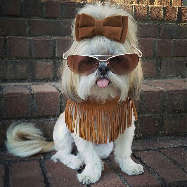Add some cool to your weekend. #ihavemorestylethanyou #supermodel #fringe #tgif Collar by @lazybonezz #lazybonezz