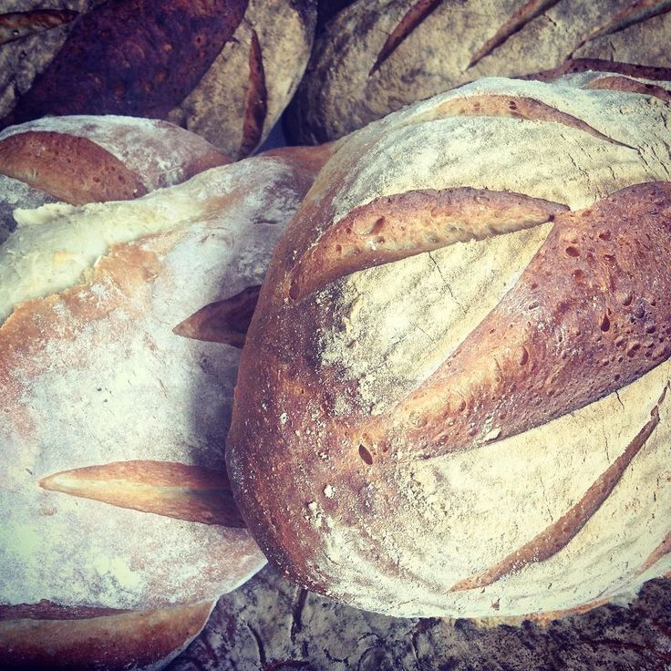 Today's batards what better way to start the day than with freshly baked real bread? Pick up yours today from @merlinsbakerycafe  #realbread #realfood #slowfood #lancashire #burscough #loaf #bread #bakery #bakerylife #baker #dough #shoplocal