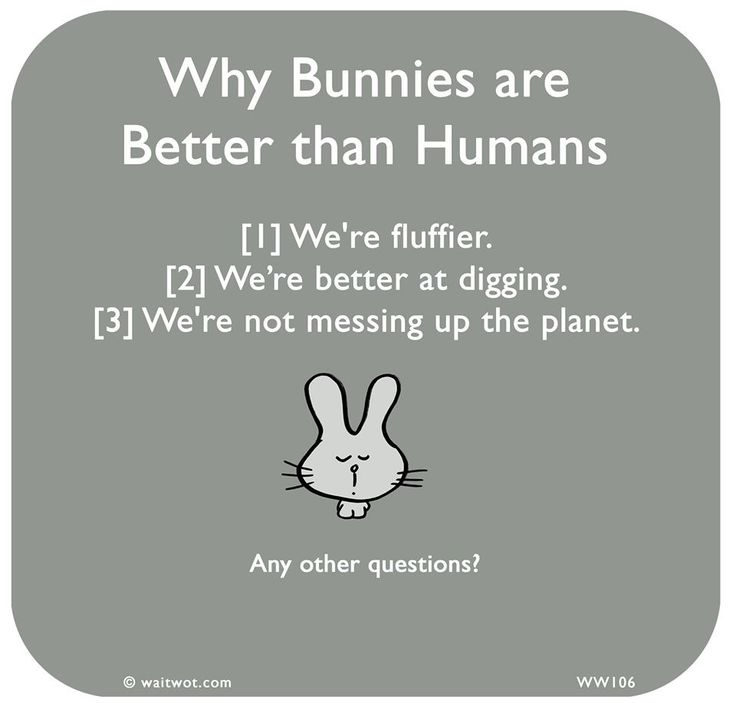 I would rather have a bun-bun than a hooman any day...