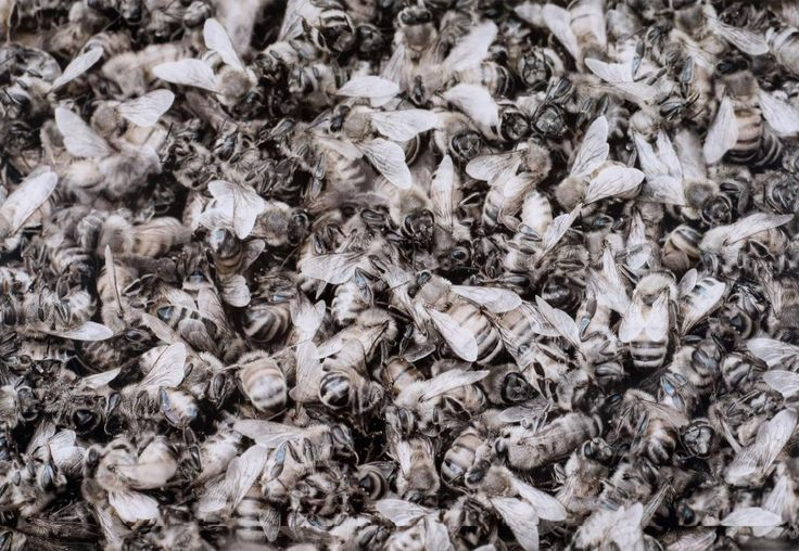 10,000 Waking Bees (Song Sting Swarm #1) - Auckland Art Gallery