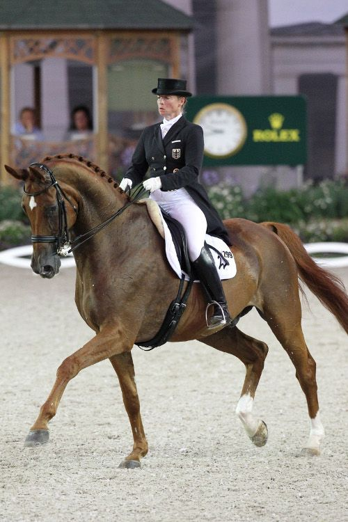Caii nu trebuie să fie neapărat mari, cât foarte corect și armonios conformați, echilibrați. De asemenea, dezvoltarea fizică trebuie să se coreleze bine cu vârsta animalului.  www.horseland.ro