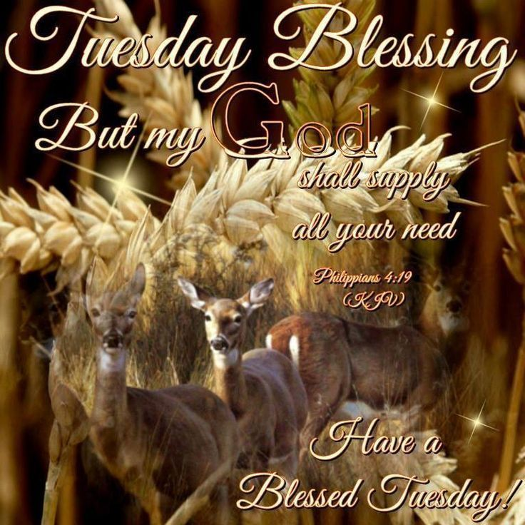 Tuesday Blessing, God Shall Supply All You Need good morning tuesday tuesday quotes happy tuesday tuesday blessings tuesday pictures tuesday images good morning tuesday