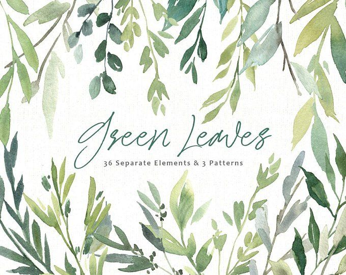 Watercolor Greenery Frames Borders Png Clipart Green Leaves Etsy Watercolor Graphic Clip Art Watercolor Clipart
