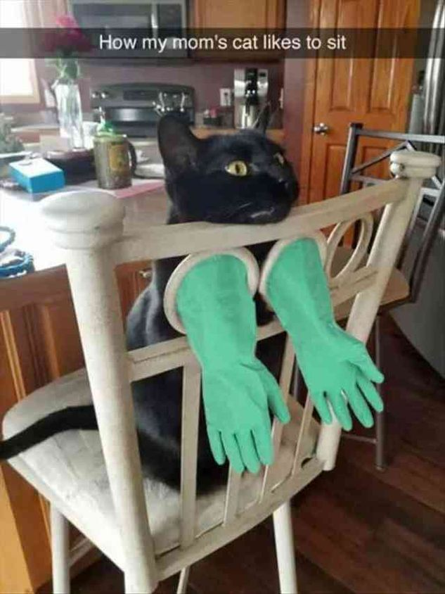 45 Funny Animal Pictures