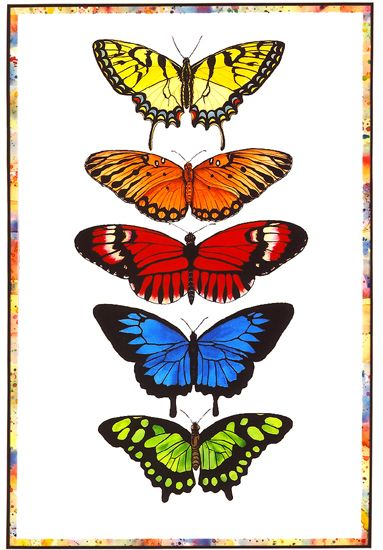 """Rainbow Butterflies"" by Lucy Arnold"