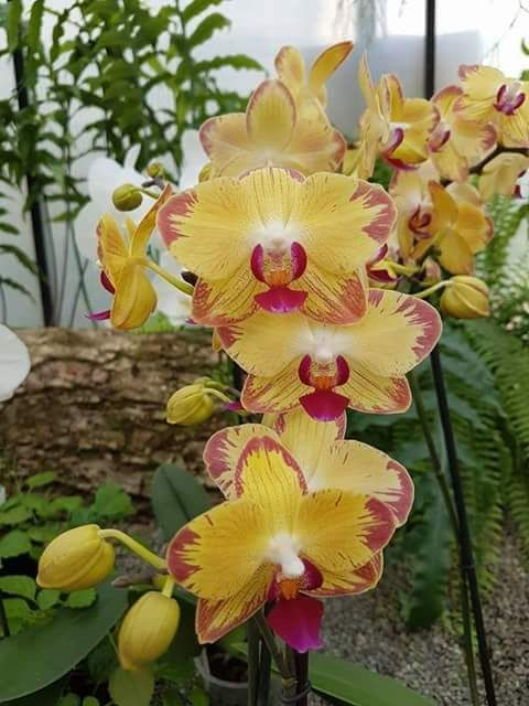 5675 Best Orquideas Images On Pinterest Beautiful