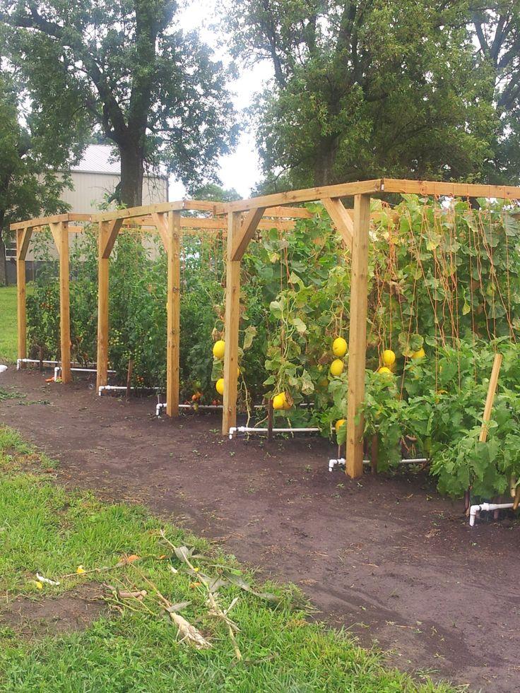 Vertical garden in Kidder MO. Mittleider gardening method.  http://growfood.com/shop?ap_id=GreatFood