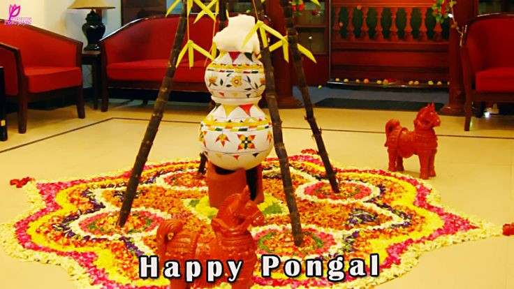 Happy Pongal Greetings Image and Wishes Card Happy