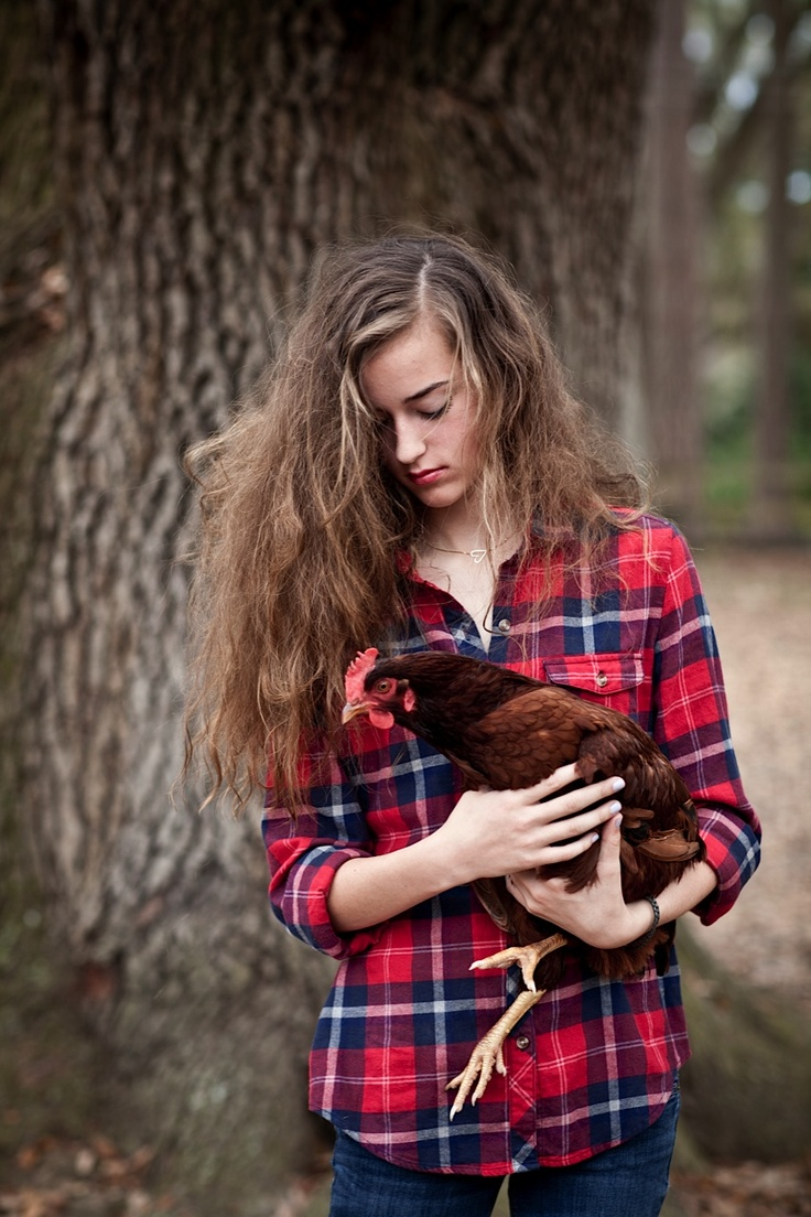 132 best backyard hens images on pinterest chicken pen the hen