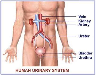 Do the symptoms of a women's bladder infection include a strong urge to urinate?