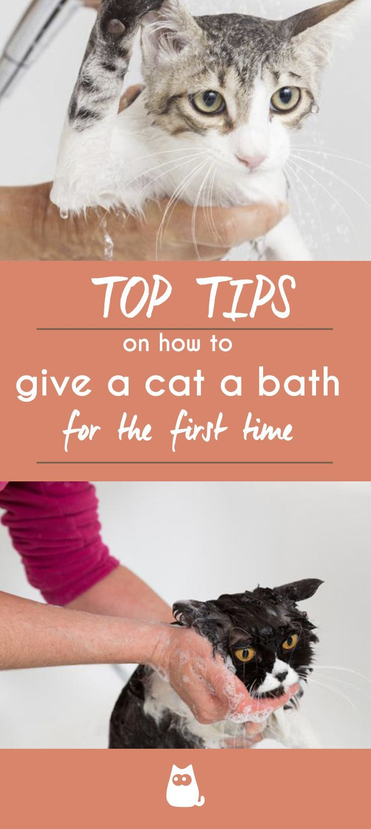 Are You Wondering How To Give Your Cat A Bath For The First Time Giving A Cat It S First Bath Can Be Stressful For The Cat First Time Cat Owner Cats