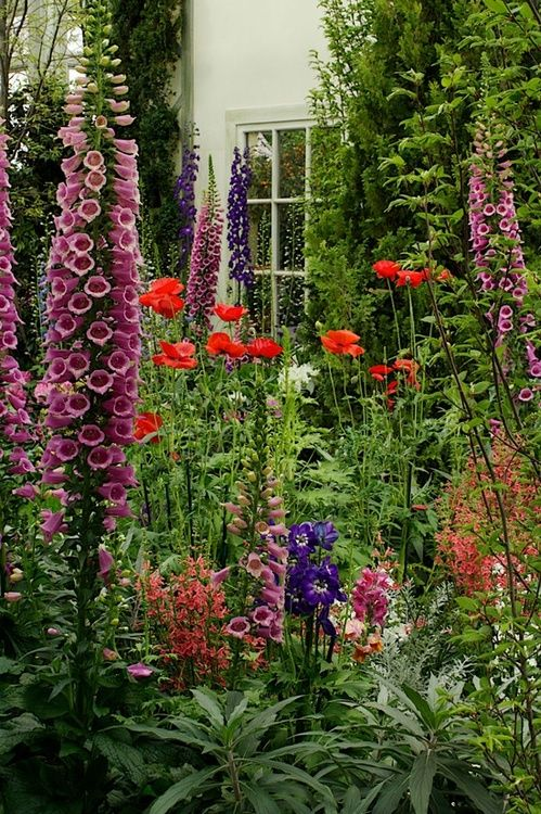 Mostly height in this garden. Fox glove, poppies, delphinium all echo the tall shrubs that frame the window. Some dusty miller and other plants fill in the space below. While gives a sense of abundance, is it too much height, making the space feel small?