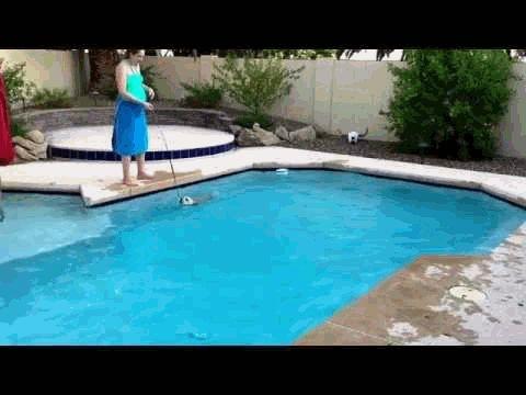 how to train dog to swim